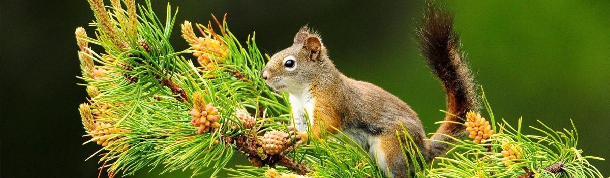 Liga Ochrony Przyrody