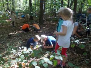 Poszukujemy bezkręowców ukrytych w ściółce leśnej