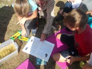 Uczymy się korzystać z przewodników do oznaczania organizmów wodnych