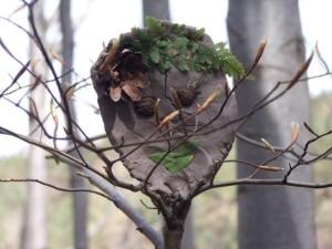 dusza_drzewa4